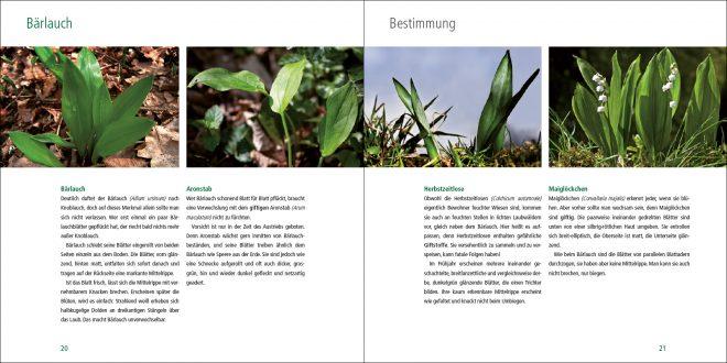 Das wilde Kraeuterbuch